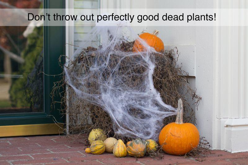 Dead-plants